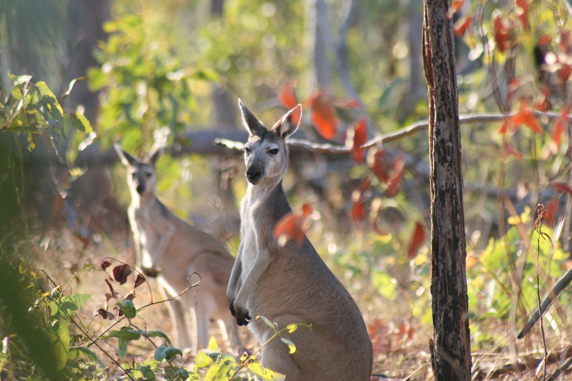 Kakadu and Arnhem Land Wildlife Tours
