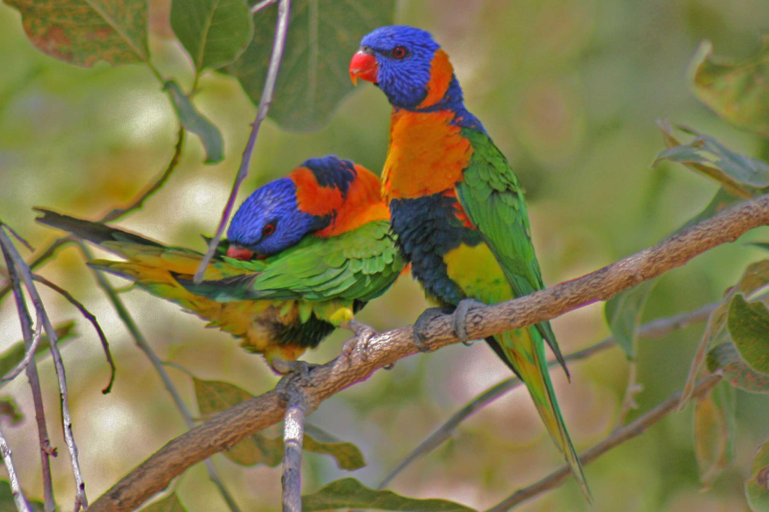 Northern Territory Bird Watching Tours